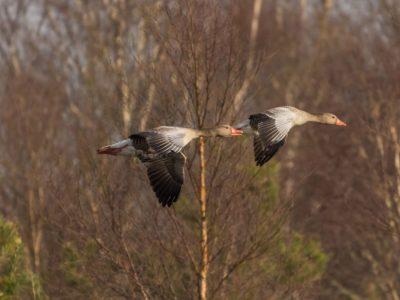 Herbstliches Auenland  – Natur- und Vogelkundliche Führung für alle Interessierten