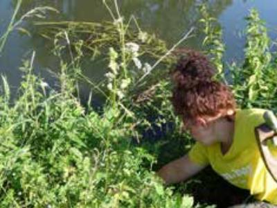 Berme mit Flachwasserbereichen in der Haseaue bei Bramsche angelegt
