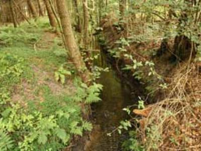 Thiener Mühlenbach Gewässerentwicklungsplan