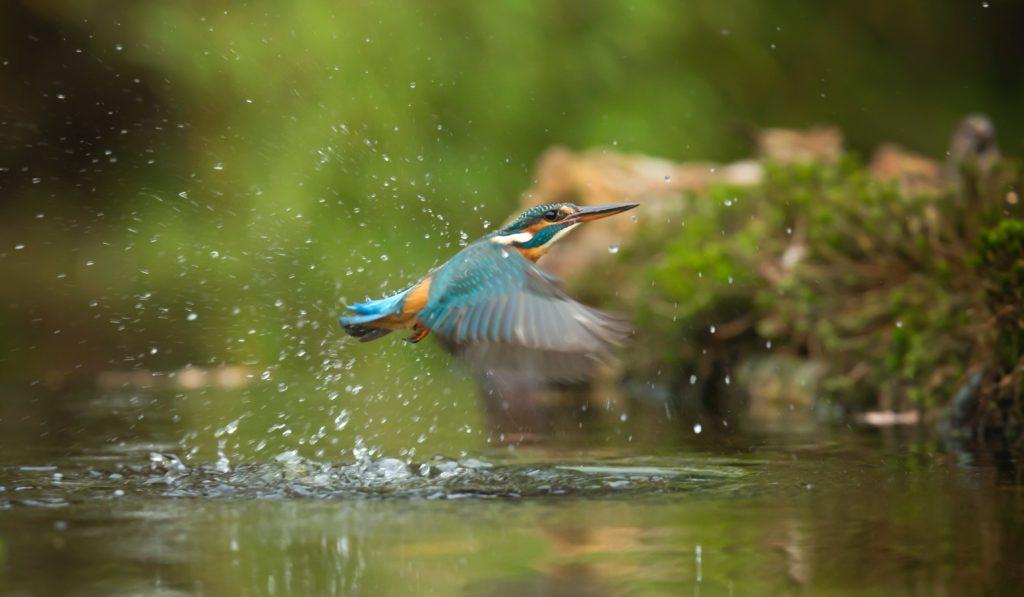 Bild von einem Vogel über der Hase
